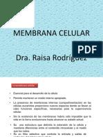 Clase de Membrana Celular (1)