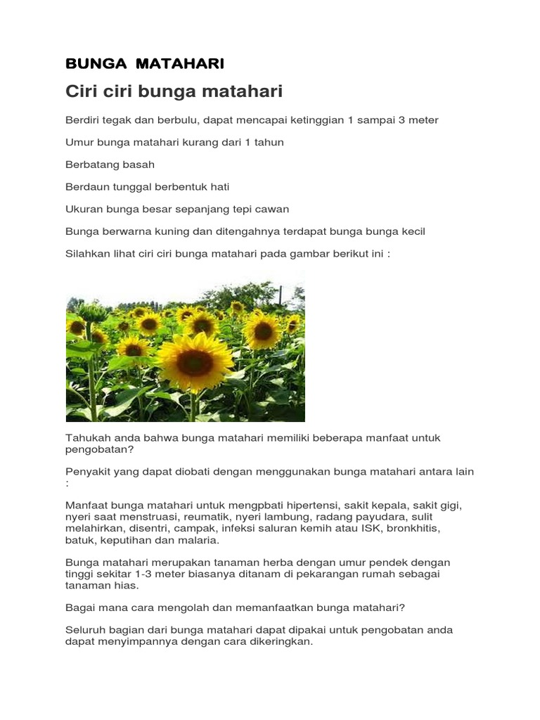Artikel Bunga Matahari