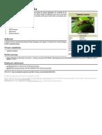 La Tijereta Común (Forficula Auricularia)