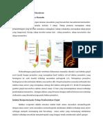 Organogenesis Turunan Mesoderm