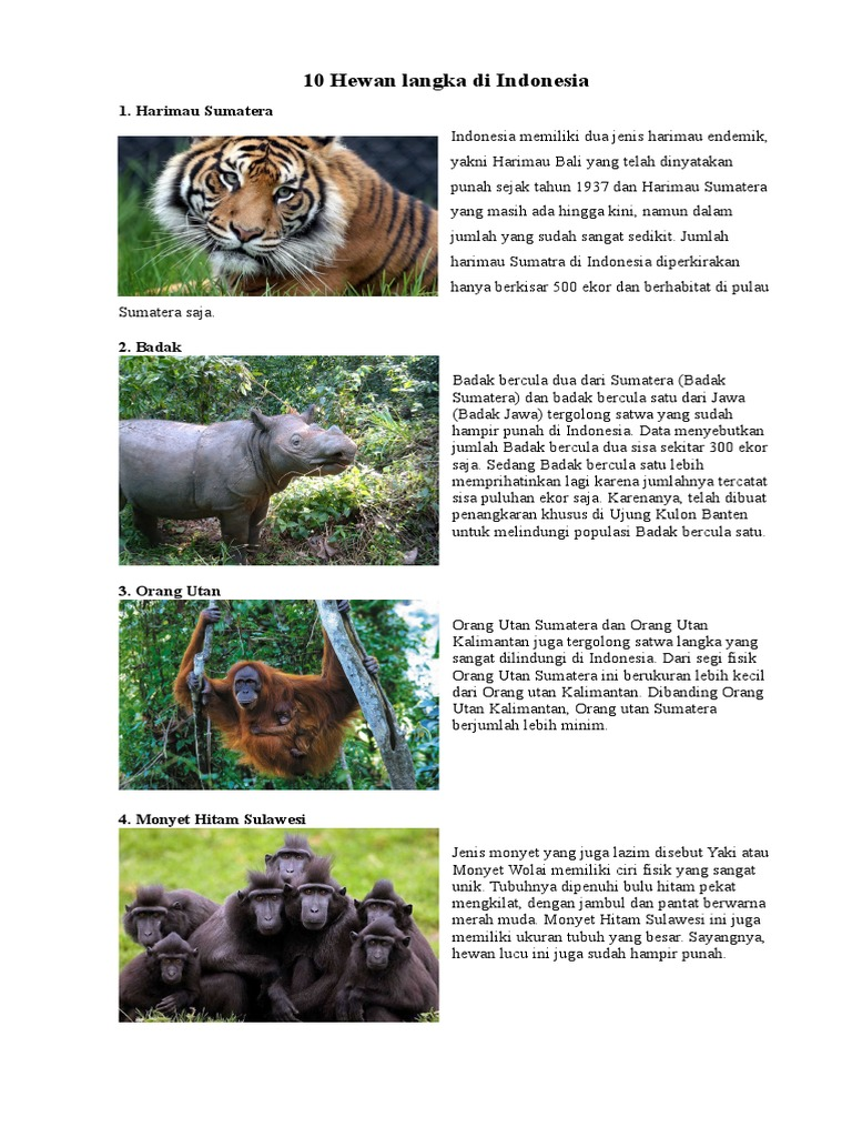 10 Hewan Langka Di Indonesia Dan 10 Tumbuhan Langka Di Indonesia