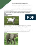 10 Contoh Hewan Herbivora Lengkap Dengan Gambar Beserta Penjelasannya