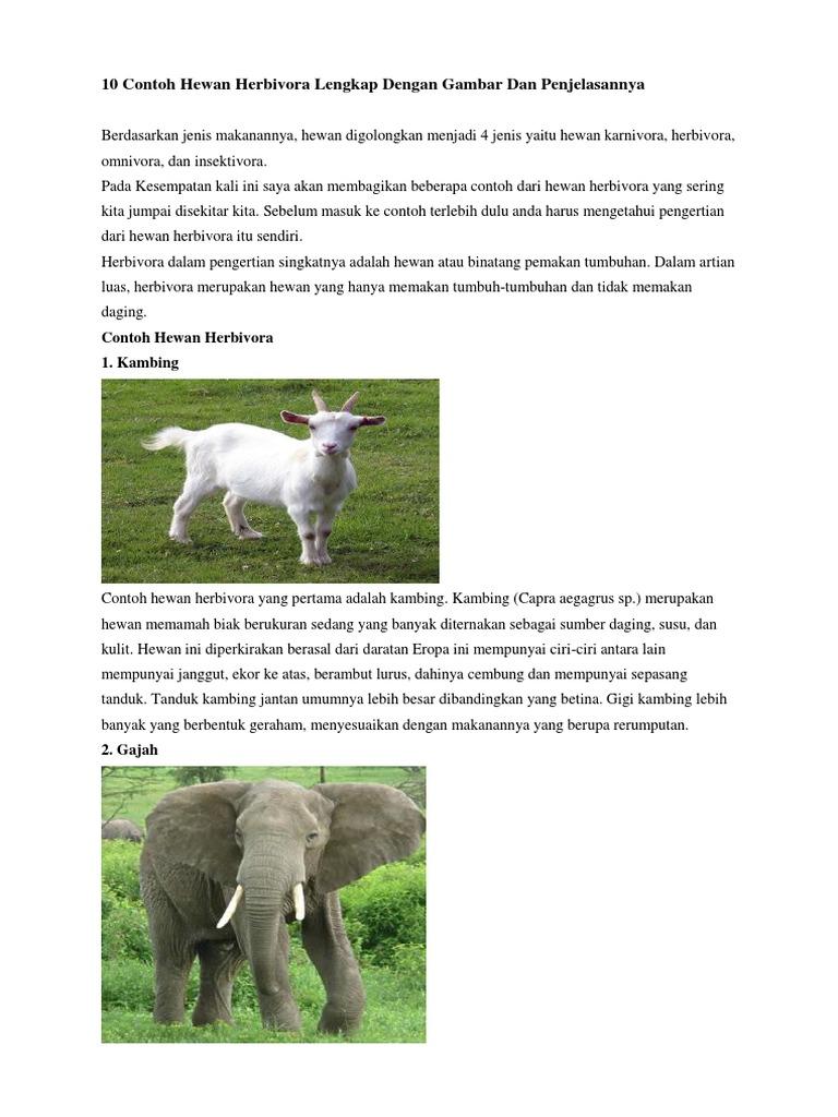 60 Gambar Hewan Anoa Dan Penjelasannya Gratis Terbaru