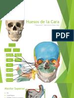 Anatomía - Huesos de La Cara
