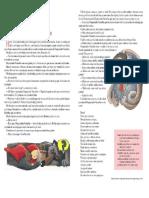 51871886-Revisao-Teste-6º-ano-1º-BIM-2011.pdf