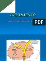 CRECIMIENTO_gus2