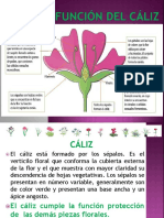 Caliz Flor