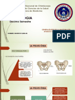 1. Generalidades de La Anatomia Del Aparato Genital y de La Pelvis Femenina