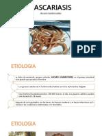 Ascariosis (1)