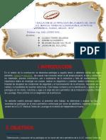 TRABAJO DE PATOLOGIA pain.pdf