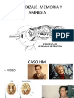 Aprendizaje, Memoria y Amnesia