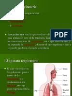 Fonación y articulación 1.ppt