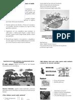 Propuesta de Trifoliar