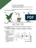 CNT - PLANTAS.docx