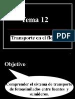 Tema_12._Transporte_por_el_floema-OPO.ppt