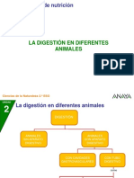 2CN 28 6P Digestion Animales