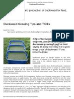 Duckweed Growing Tips and Tricks _ Duckweed Gardening