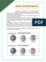 Protosotomados y Deuterostomados