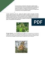 Flora y Fauna Terminado