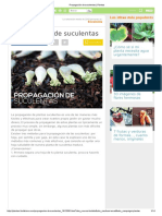 Propagación de suculentas _ Plantas.pdf