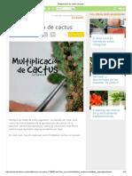 Multiplicación de Cactus _ Plantas