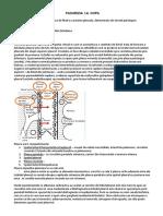 15. Pleurezii.pdf
