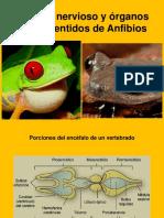 Sistema nervioso y órganos de los sentidos de.pptx