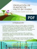 135287212-7-1-Manejo-del-palto-en-vivero-pptx.pptx