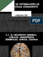 3.1 Neocortex Cerebral