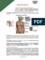Sistema-Endocrino.doc