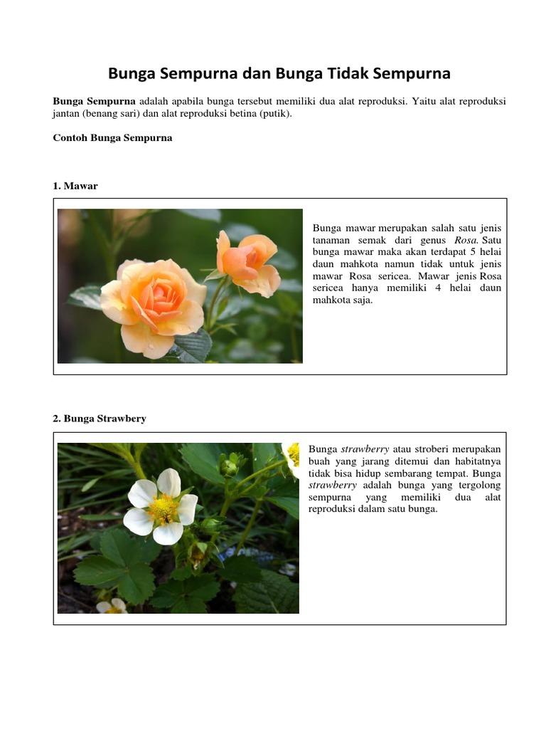 Jenis Bunga Tidak Sempurna Mawar Ku