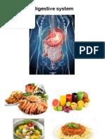 Digestive System (1)