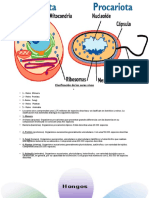 teoria-Microbiologia
