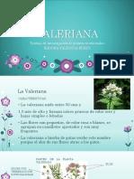 Valeriana- Isidora Valencia