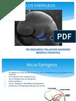 Arcos Faringeos33