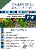 Protozoarios en La Biorremediación