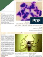 El_cariotipo_de_Sicarius_sp_sus_relaciones_citotaxonomicas.pdf