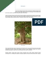 Pohon gayam
