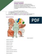 Aparatos y Sistemas de Cuerpo