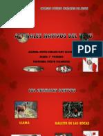 Animales Nativos Del Peru