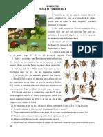insecte poze si curiozitati.doc