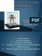 Notiuni de anatomie endodontica - Copy.pptx