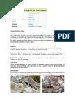 Clasificación Científica Del Gato Andino