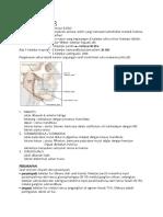 anatomi KELENJAR LIUR