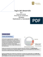 6_2_Xenopus.pdf