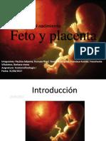 Embriologia Power Terminado