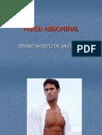 Pared Abdominal Dra Gris