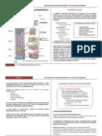3. Clase Tiroides y Glandula Suprarenal