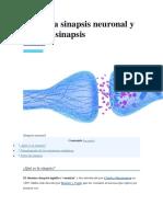 Qué Es La Sinapsis Neuronal y Tipos de Sinapsis
