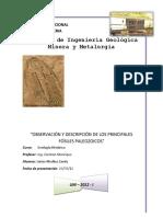 5 Trabajo Observacion y Descripcion de Los Principales Fosiles Paleozoicos